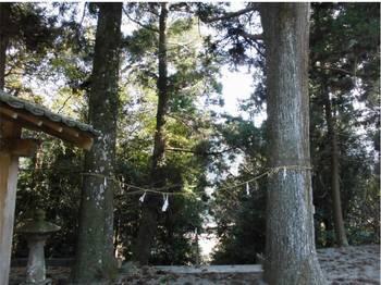 日向市東郷町11 羽坂神社 境内入口ご神木.jpg